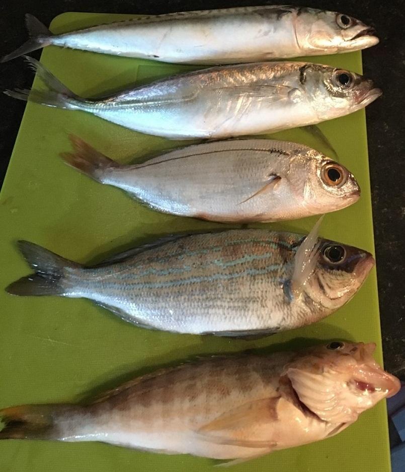 poissons peche frontignan
