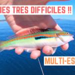 Le poisson est très difficile - 24 mai 2020
